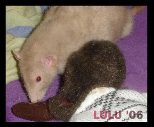 Lorenco i Łoś ;)