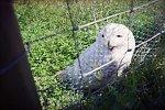 http://images3.fotosik.pl/127/385e5fffdb5c08efm.jpg