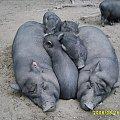urocza rodzinka :) #zoo #zwierzęta #niewola