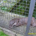 #zoo #zwierzęta #niewola