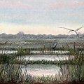 na jeziorze #jezioro #czapla #ptak #szuwary