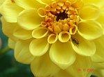 http://images3.fotosik.pl/210/44efbdbcc54a973am.jpg