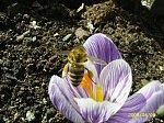 http://images3.fotosik.pl/218/d0427b4a0bf20882m.jpg