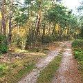 W Rezerwacie Piskory #Piskory #rezerwat #las #droga