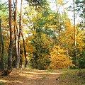 W Rezerwacie Piskory #Piskory #rezerwat