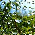 pajeczynka po deszczu #makro #kropla #woda #pajeczyna