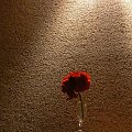 #tynk #kwiatek