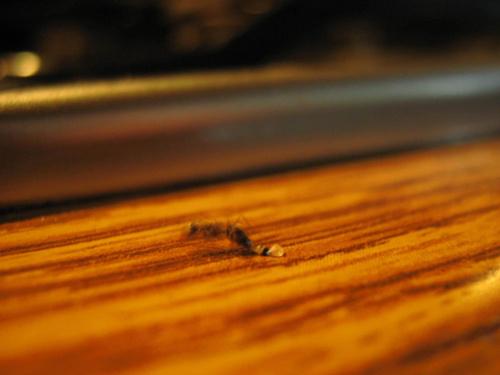Mrówka.:)