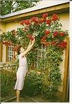 http://images3.fotosik.pl/248/0f401ebed5727942m.jpg