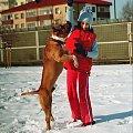 Zabawy na śniegu #amstaf #pies #ast