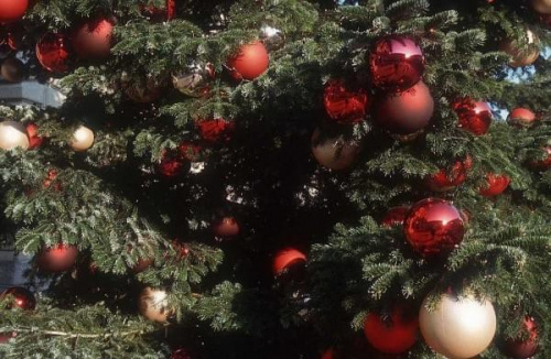 Świąteczna choinka. #choinka #ŚwiątecznaChoinka #bombki #DrzewkoŚwiąteczne #prezenty #DrzewkoBorzonarodzeniowe #sosna #CzerwoneBombki #LampkiChoinkowe #OzdobyChoinkowe