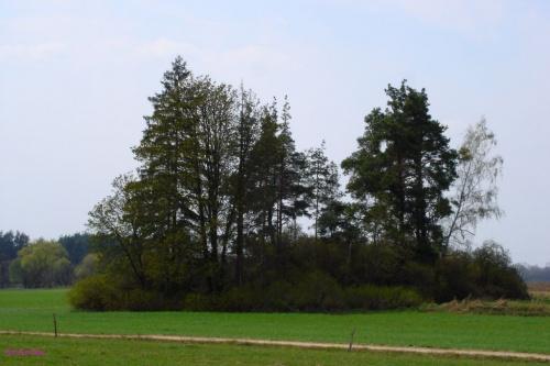 Pietrzyki - cmentarz wiejski