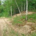 Droga przez las z Wronowa do Zakładów Azotowych #WycieczkaRowe #rowery #turystyka #las