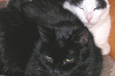 Moje koty 2005